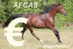 cheval arabe shagya vendre