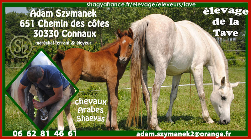 Rencontres arabes france