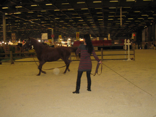 Shagyafrance site de l 39 arabe shagya for Salon du cheval a paris