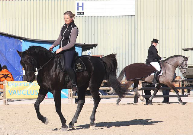 Shagyafrance site de l 39 arabe shagya for Salon du cheval d avignon