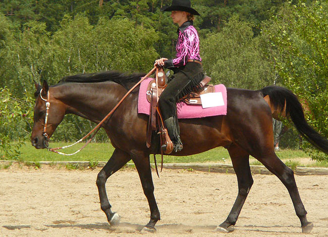 cheval arabe western
